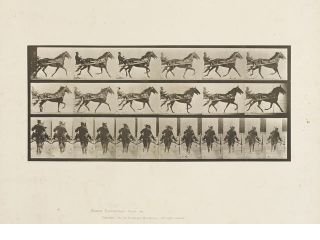 Animal Locomotion Horse racing with a sulky by Eadweard Muybridge, Published in 1887. Eadweard...