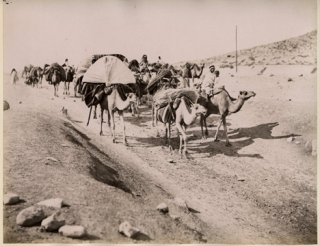Photograph of Camel Train in the Sahara, Printed Circa 1890s. Sahara Photo Arab Camel